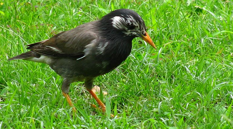 鳥害防除製品の通信販売